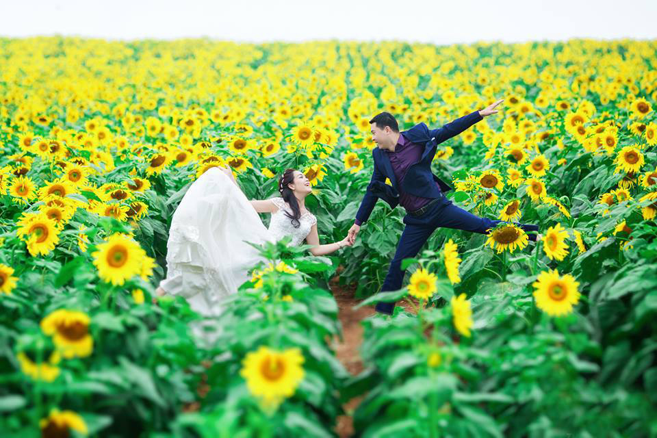 Du lịch Vinh mùa hoa hướng dương