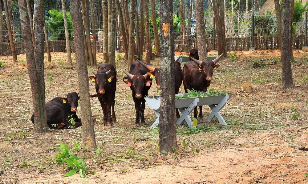 Công viên Chăm sóc và Bảo tồn Động vật Vinpearl Safari